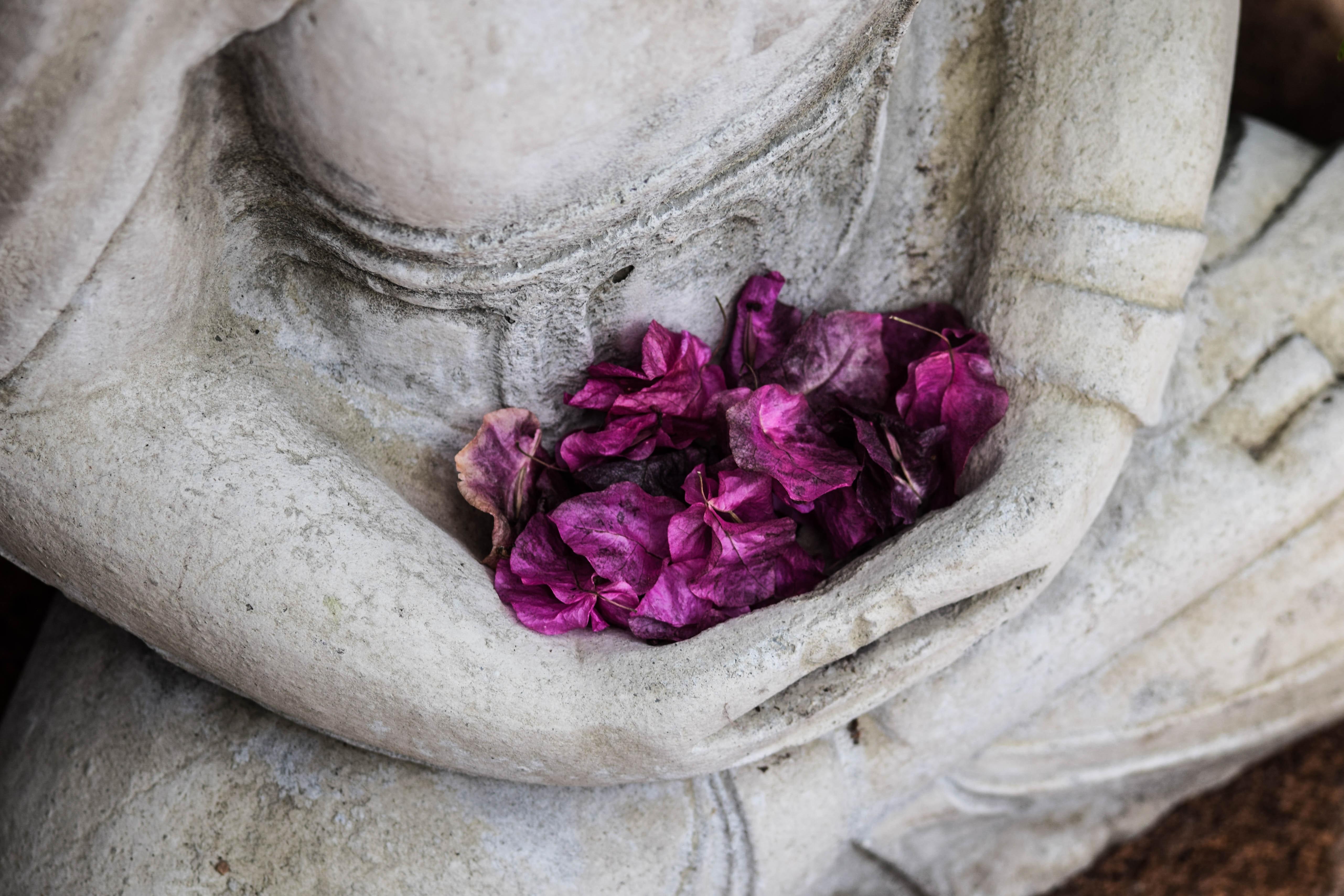 violet embrace
